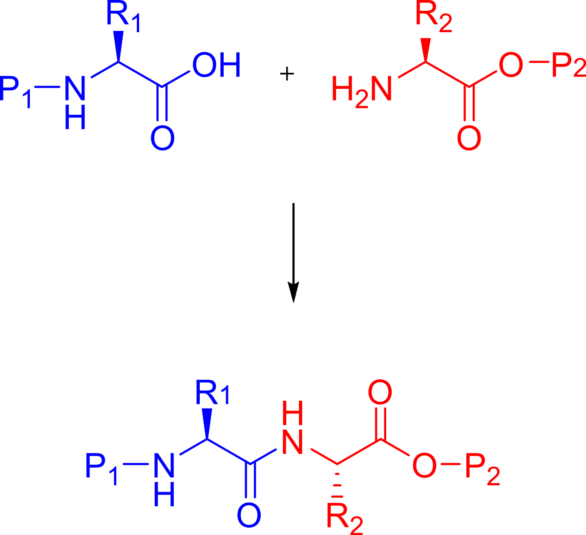 Drawing peptides synthesis. Peptide wikipedia