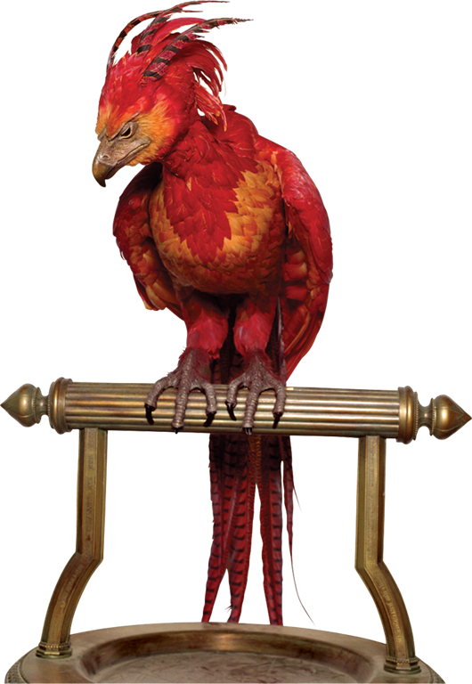 L fawkes caph hpe. Drawing phoenix harry potter vector royalty free download