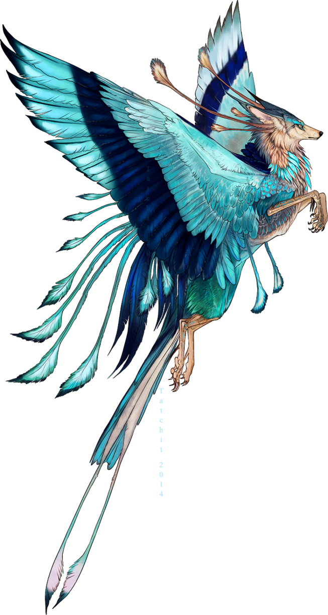 Drawing phoenix indian. Roller feonix adopt by
