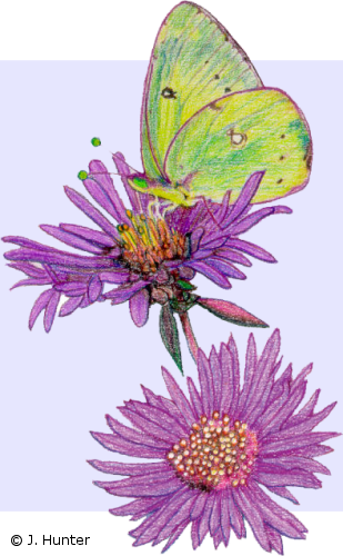 Drawing science colored. Color nature drawings