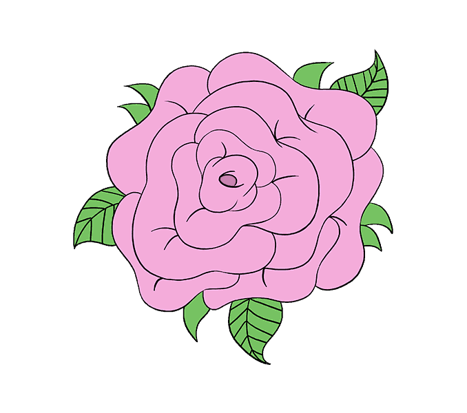 Pink drawing rose. How to draw a