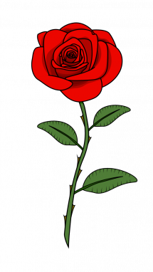 Stem drawing red rose. How to draw flowers