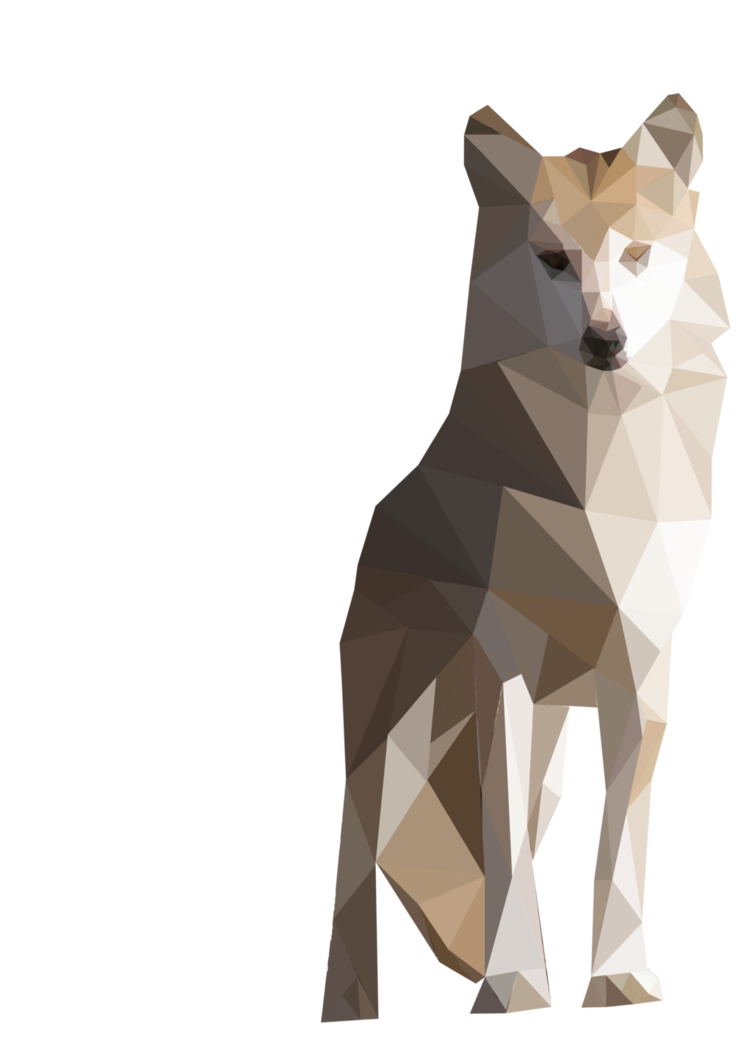 Polygons drawing animal. Polygon mexican wolf by