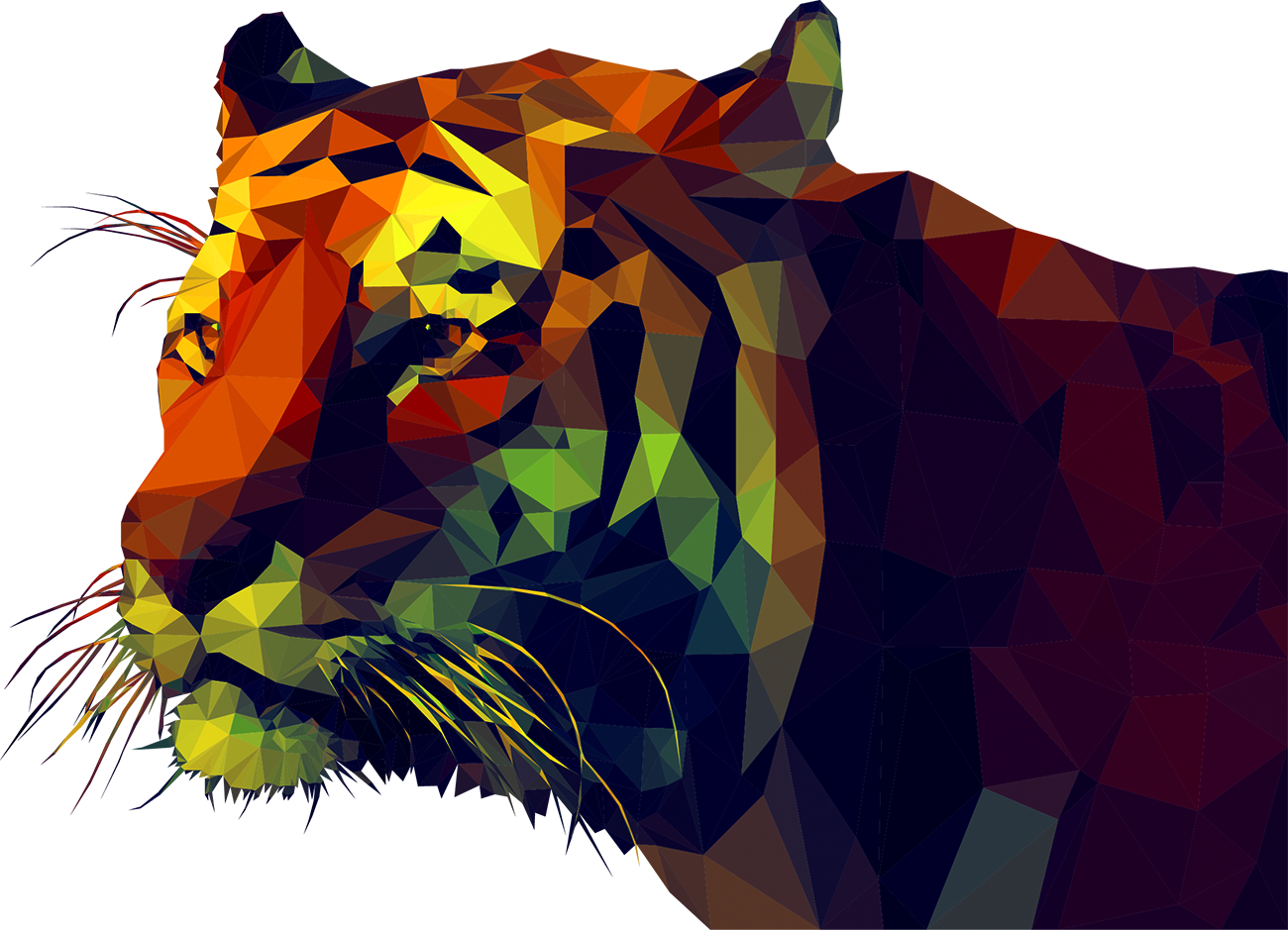 Polygons drawing cat. Tiger polygon illustration geometry