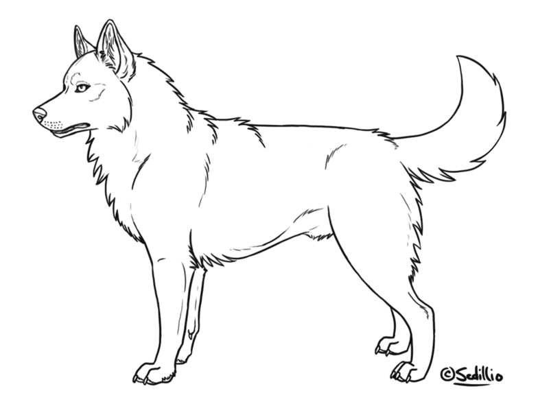 Drawing polygons husky. Free siberian lineart by