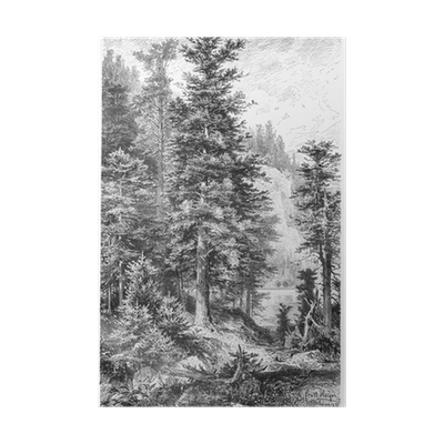 Drawing posters nature. Vintage th century of