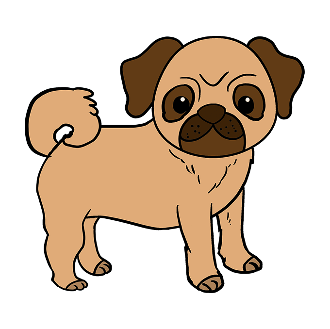 Drawing pug. How to draw a