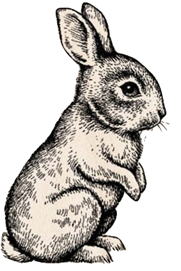 Rabbits drawing. Rabbit line art pencil