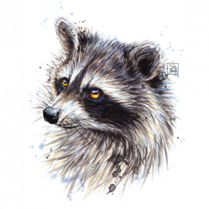 drawing raccoon pen