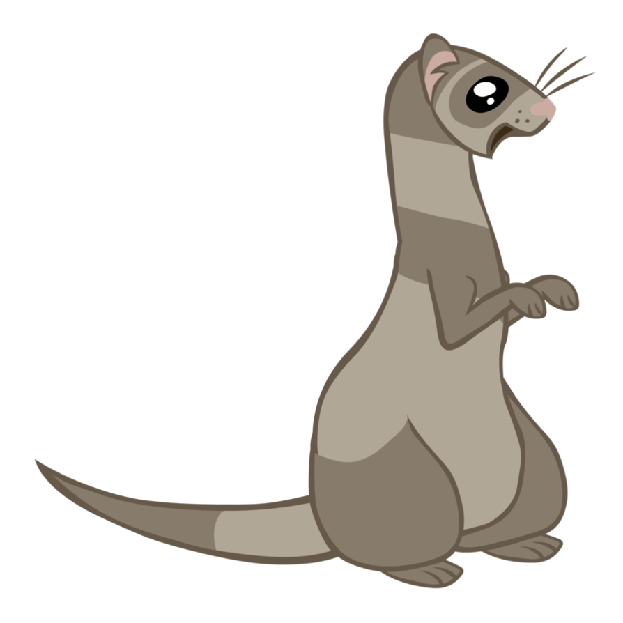 Drawing raccoon weasel. Mlp ferret vectorized by