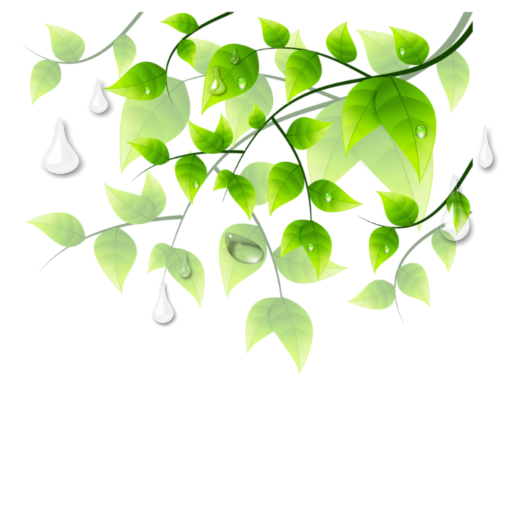 Drawing raindrops leaf. Ftestickers leaves greenery border