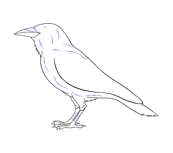 drawing raven ink