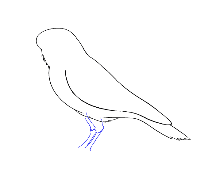 Drawing raven wing. How to draw a