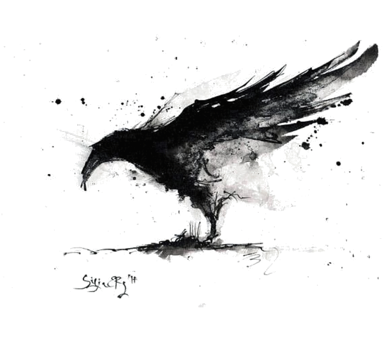 Drawing raven black and white. Just a cool ravens