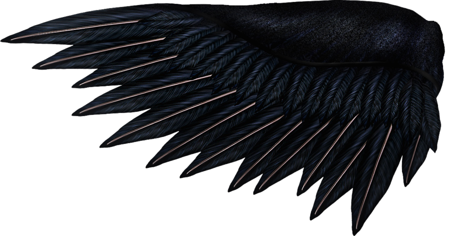 Drawing raven wing. Collection of wings