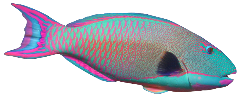 Drawing realism fish. Realistic clipart frames illustrations