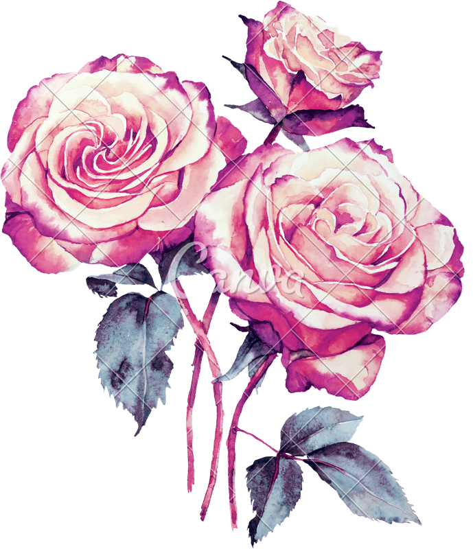 Drawing realism flower. Roses bouquet watercolor photos