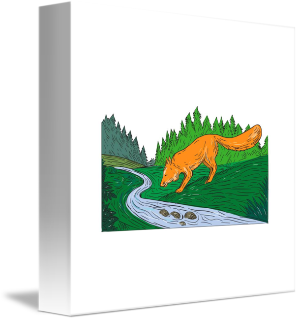 Drawing river creek. Fox drinking woods by