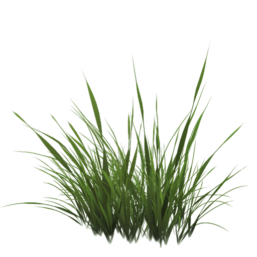 Drawing river grass. Png texture pinterest architecture