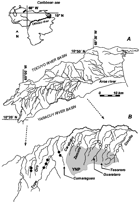 Drawing rivers perspective. A the aroa river