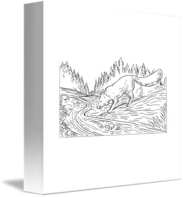 Drawing river black and white. Fox drinking woods by