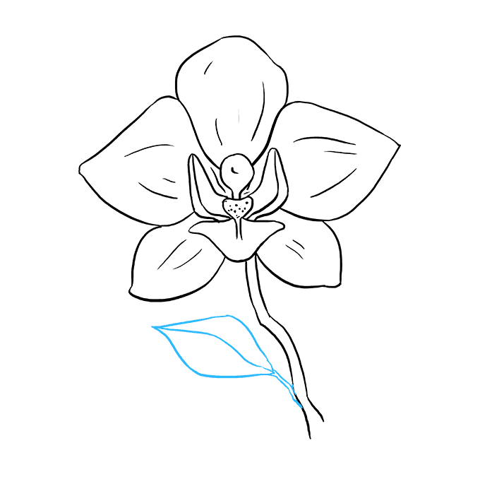 Drawing orchid violet. How to draw a