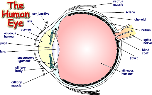 Drawing science eye. The human advanced level