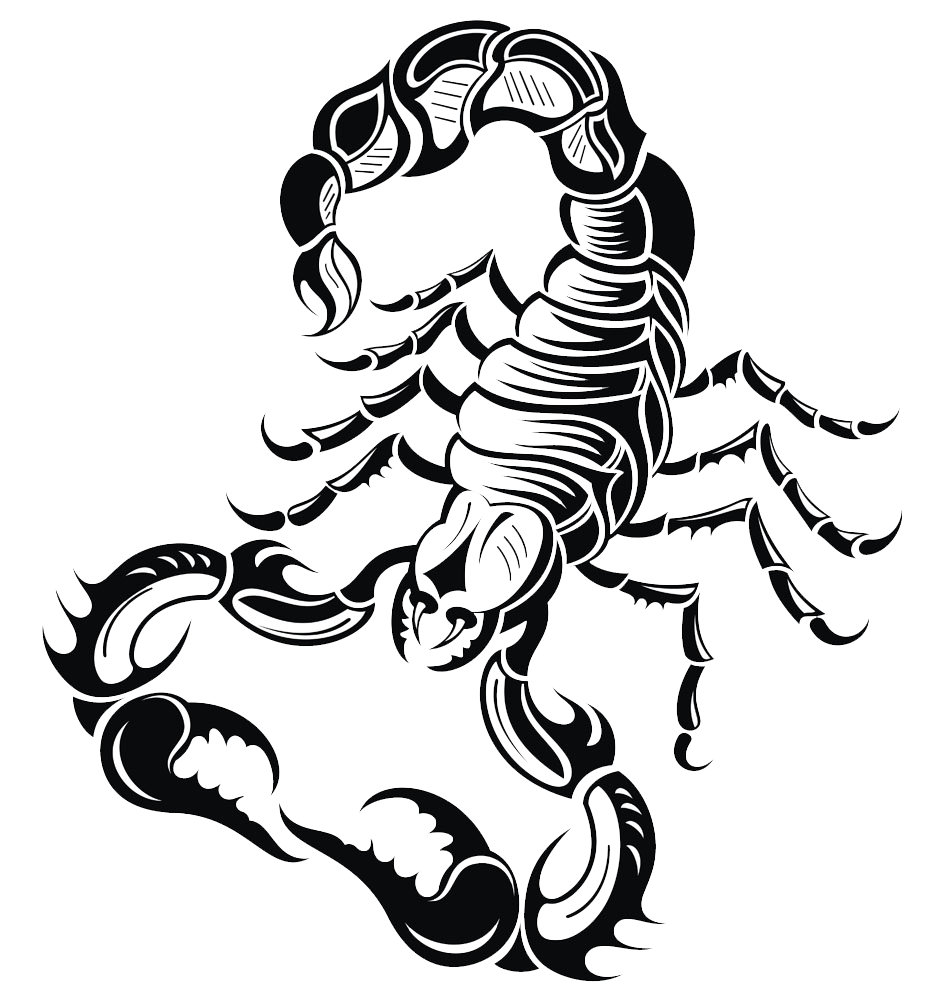 Drawing scorpions. Scorpion royalty free clip