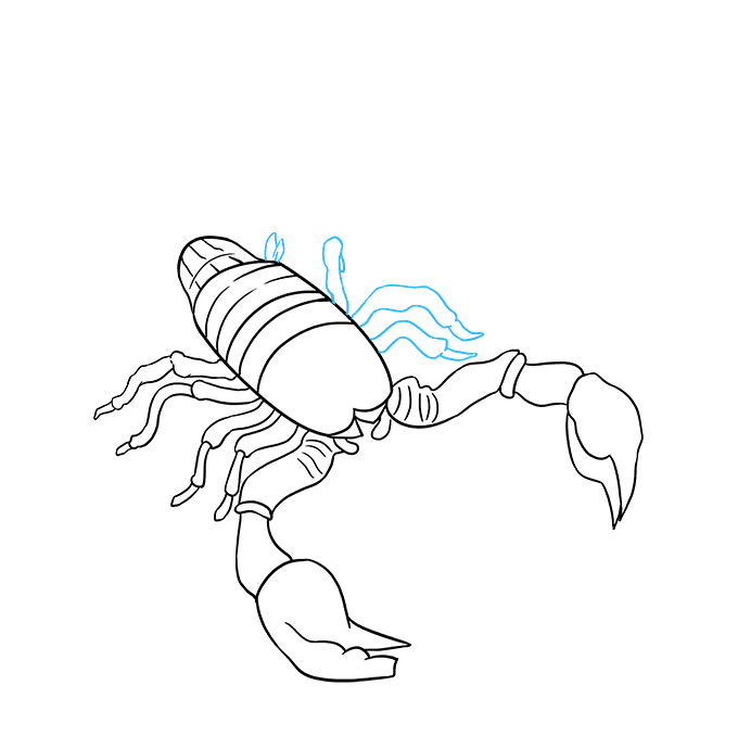 Drawing scorpion insect. How to draw a