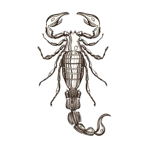 Drawing scorpion insect. Illustration hd free textbooks