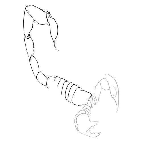 Drawing scorpion outline. How to draw d