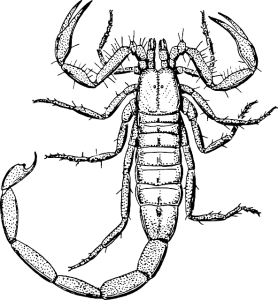 Scorpian drawing tail. Signs of scorpions on