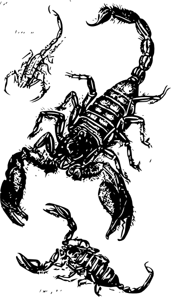 Drawing scorpions. Black clip art at