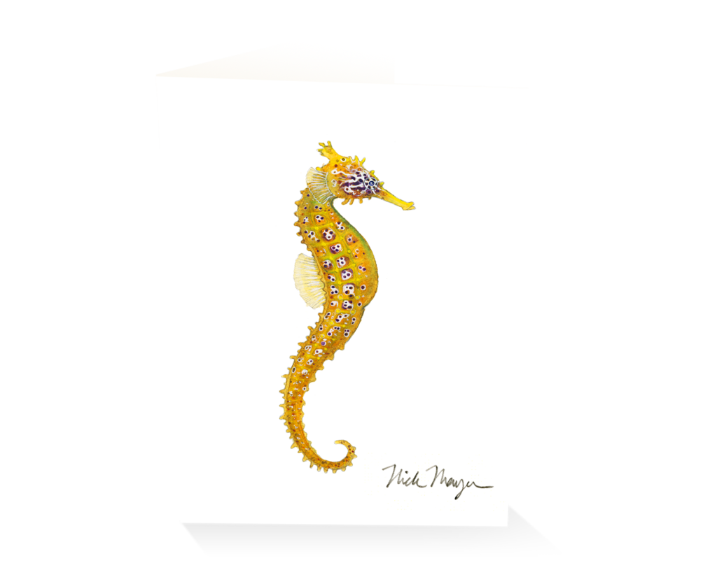 Drawing seahorse hippocampus. Pacific i nick mayer