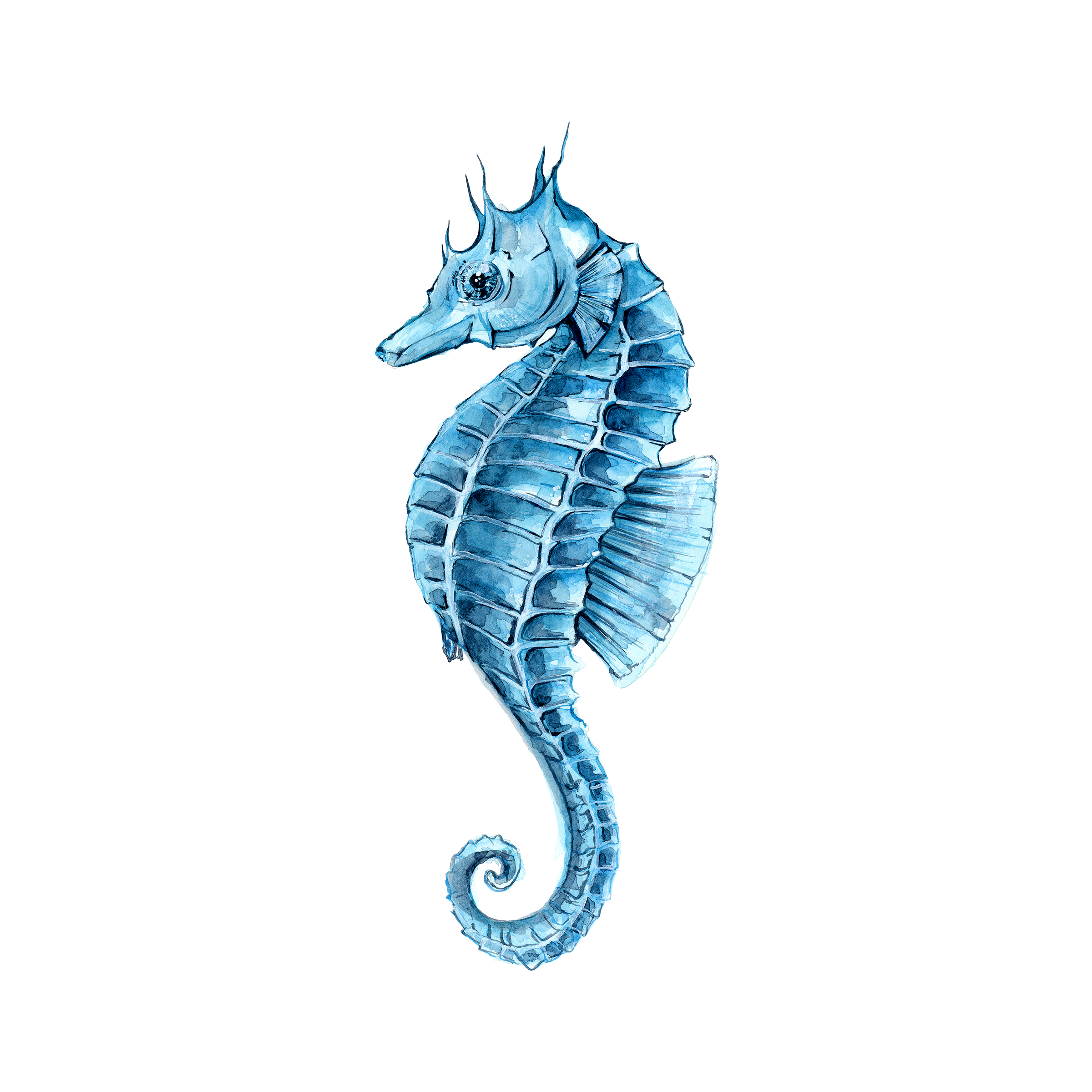 Drawing seahorse hippocampus. Watercolor painting clip art