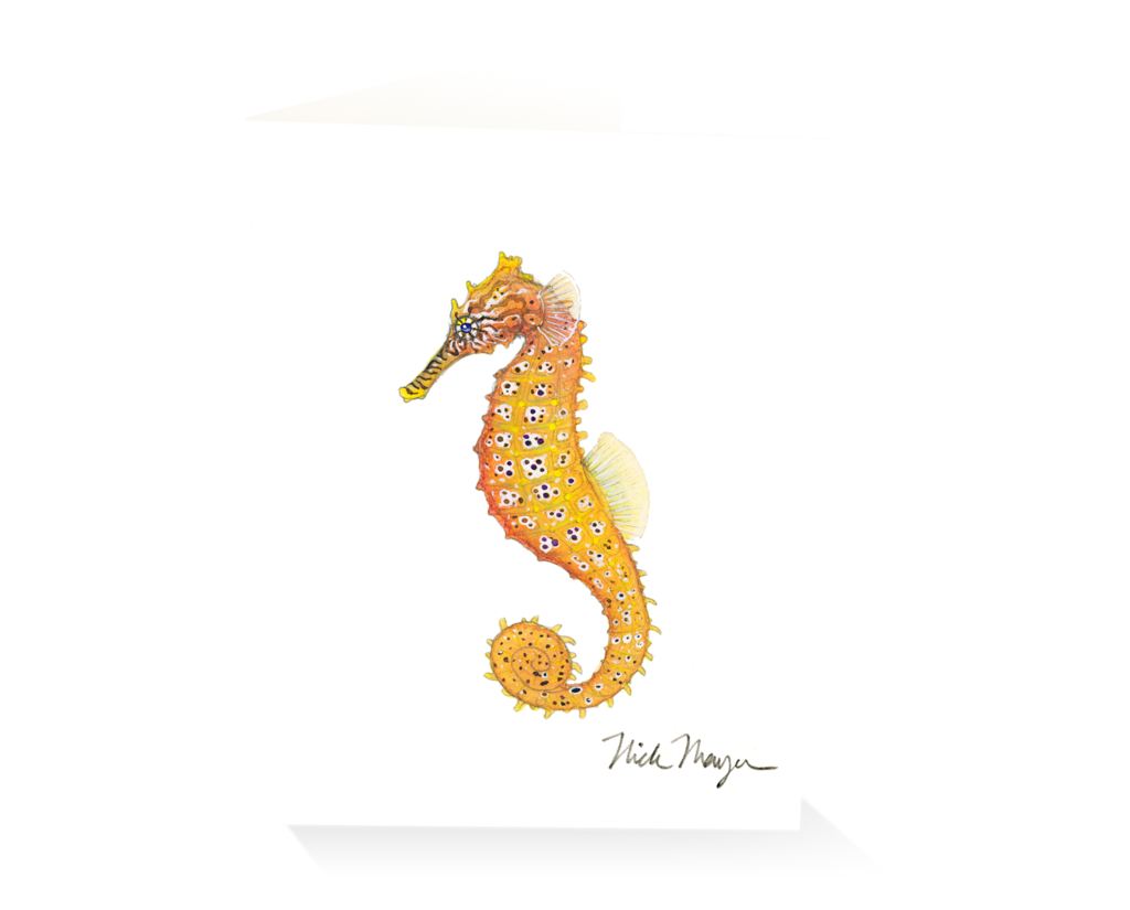 Drawing seahorse pacific. Ii nick mayer art