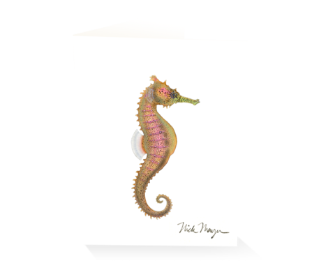 Drawing seahorse pacific. Stationery tagged ocean beauties
