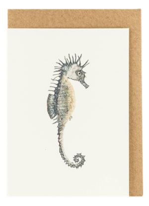 Drawing starfish seahorse. Claire vaughan designs single