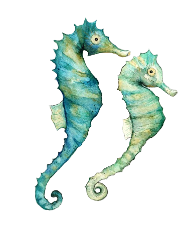 Drawing seahorse tattoo. Pin by deb newell