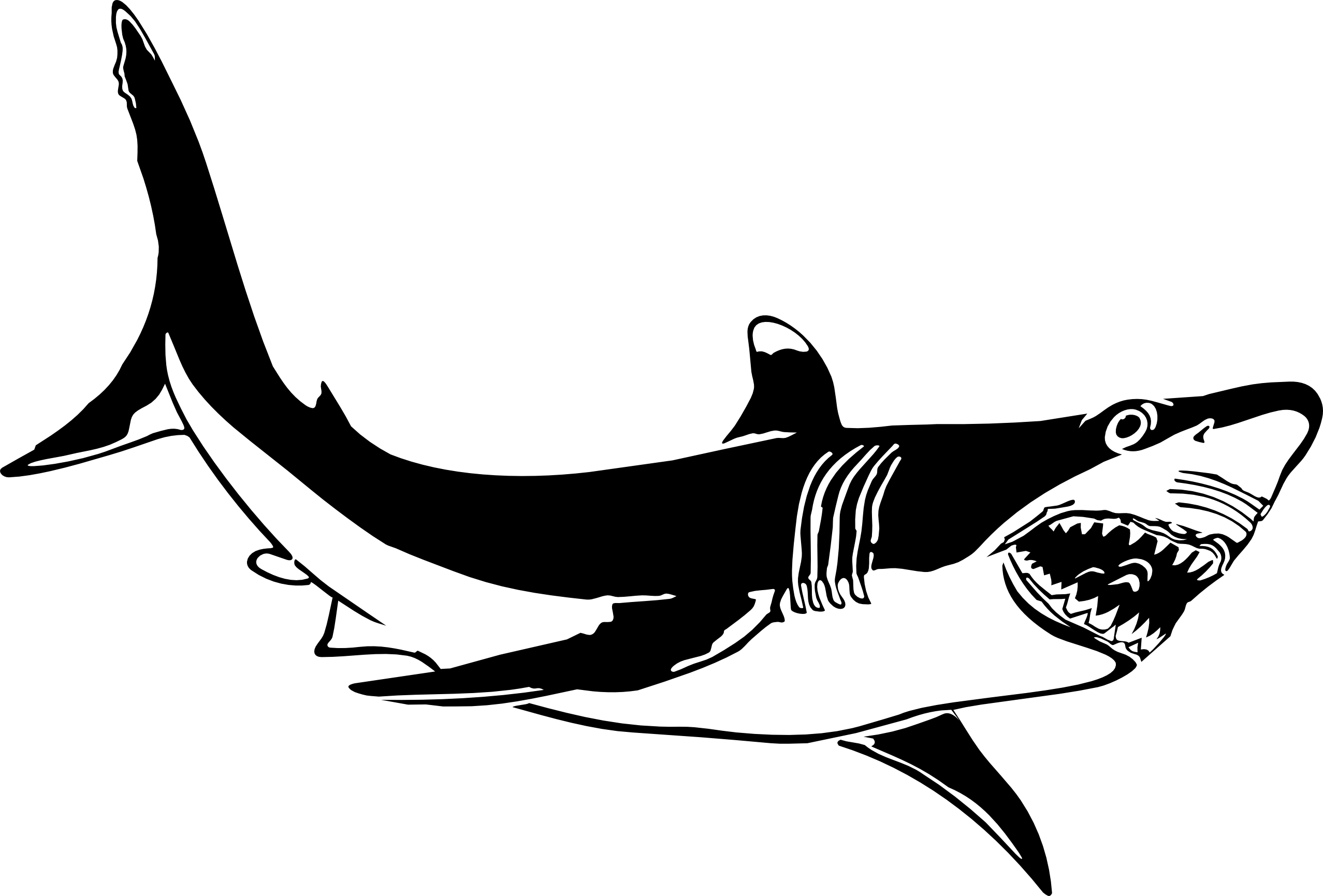 Drawing shark. Great white clipart panda