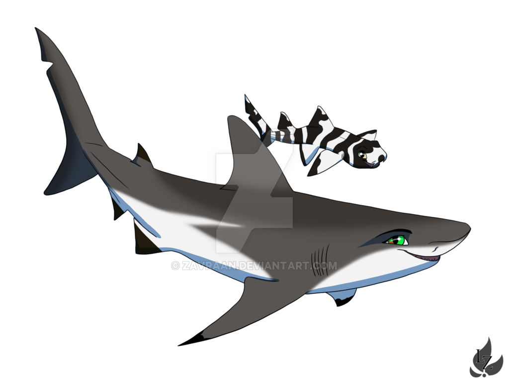Drawing shark creative. Laura the by zavraan