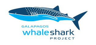 Transparent whale gentle. The project galapagos shark