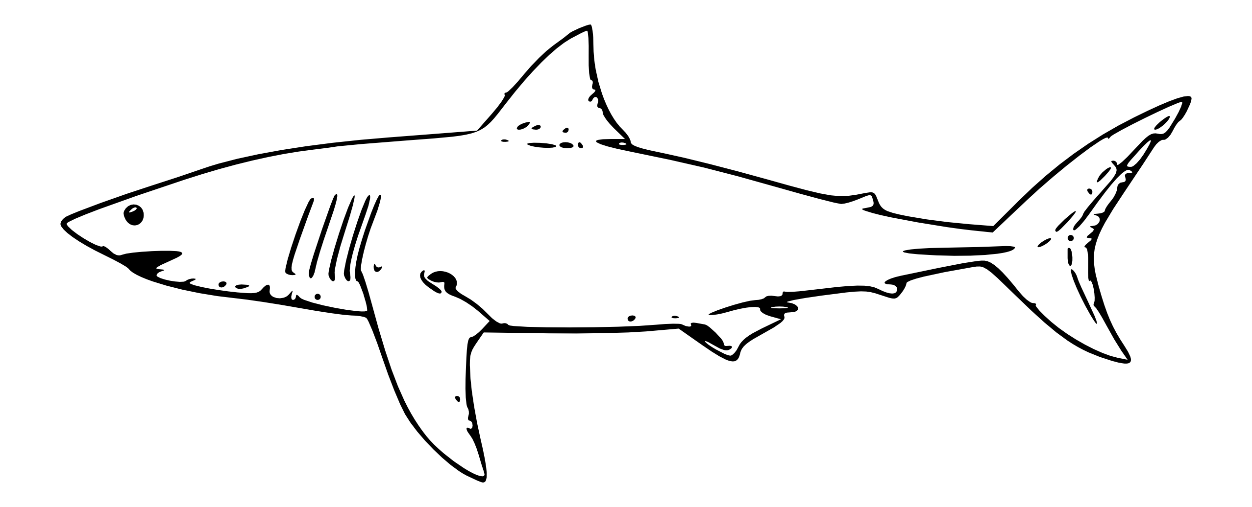 Drawing shark gills. Collection of hammerhead