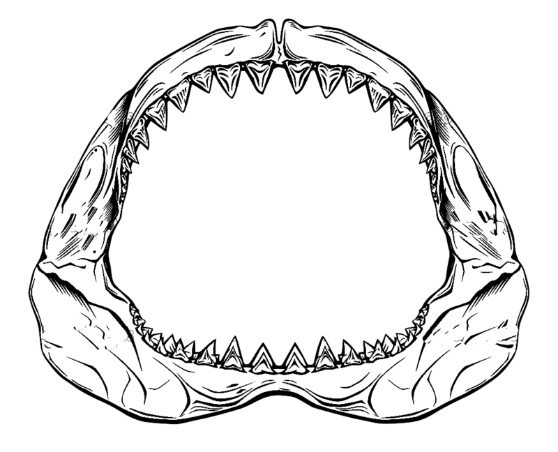 revenge drawing jaws