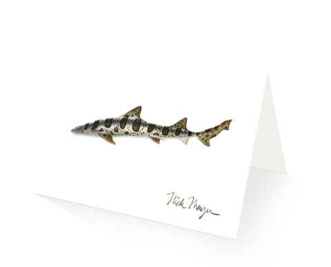 Drawing shark leopard. Products page nick mayer