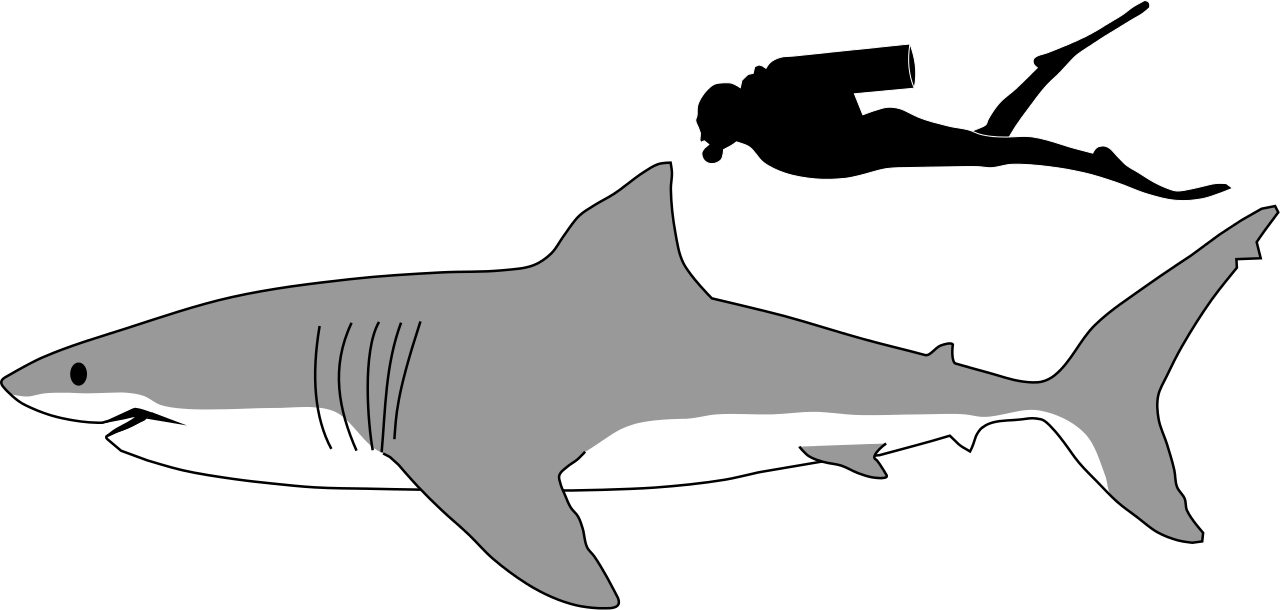 Drawing shark profile. Collection of high