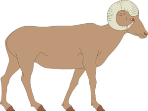 Drawing sheep bighorn. Walking clip art at