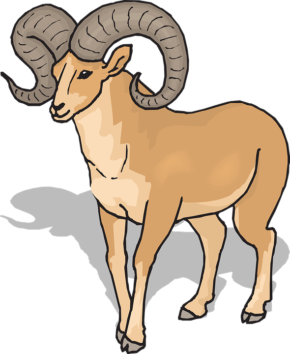 Drawing sheep clipart. Bighorn x free clip