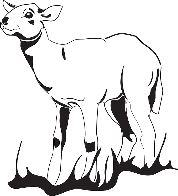 Drawing sheep sketch. Outline at getdrawings com