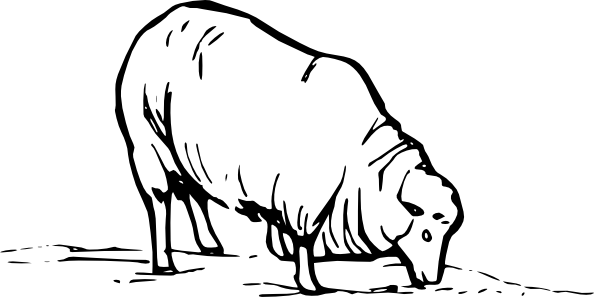 Drawing sheep clipart. Free download clip art